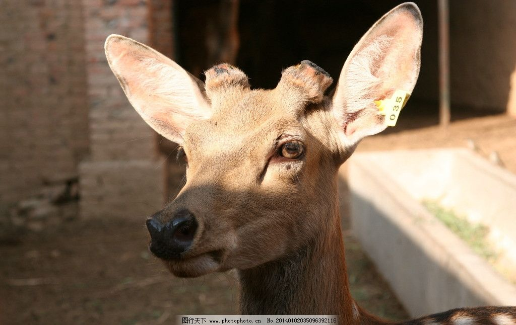 小鹿 动物 鹿 可爱 温顺 野生动物 生物世界 摄影 72dpi jpg