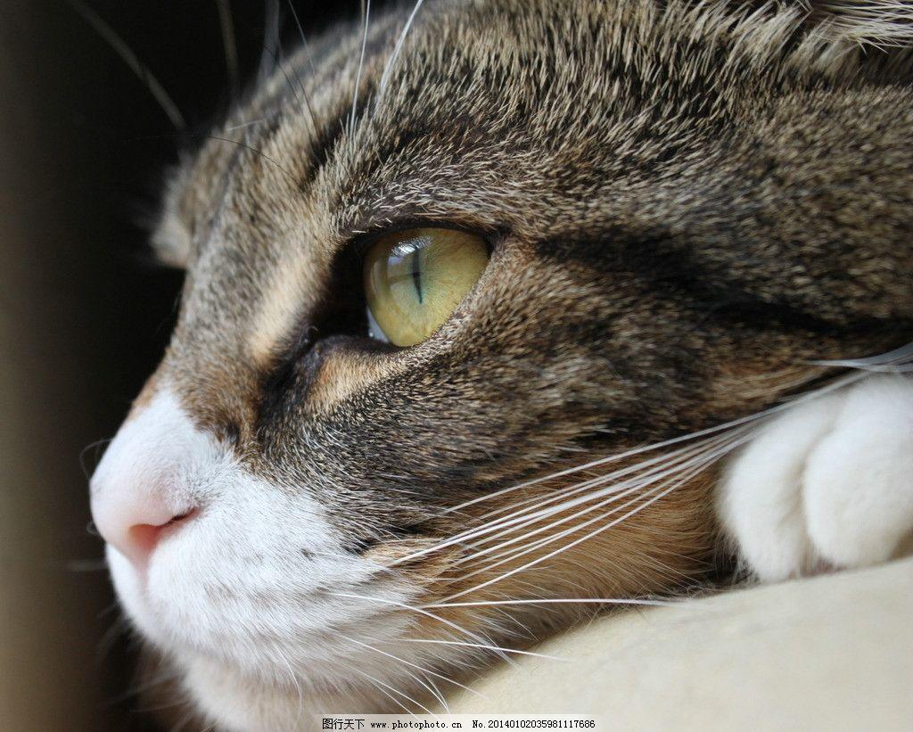 壁纸 动物 猫 猫咪 小猫 桌面 1024_821