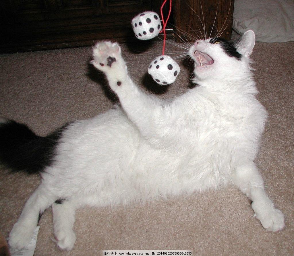 玩耍的白猫 猫咪 家禽 宠物 可爱猫咪 宠物猫 摄影