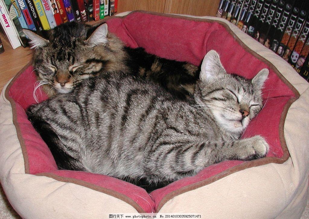 壁纸 动物 猫 猫咪 小猫 桌面 1024_725