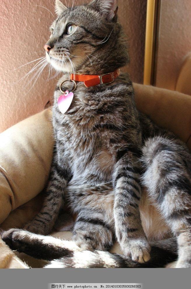 猫组图 猫 猫咪 家禽 宠物 可爱猫咪 宠物猫 家禽家畜 生物世界 摄影