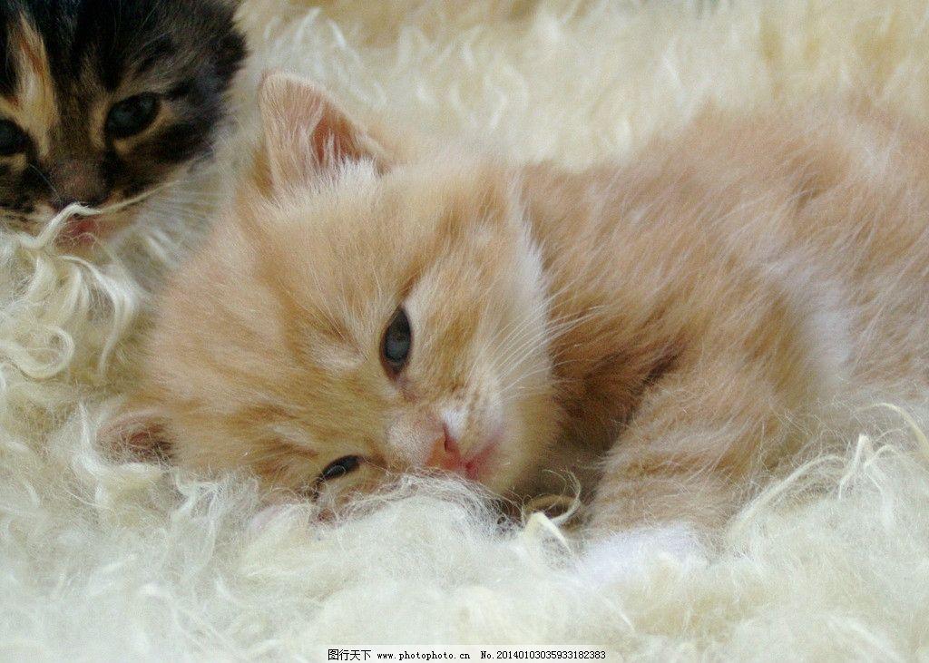 黑猫黄猫 猫 猫咪 家禽 宠物 可爱猫咪 宠物猫 家禽家畜 生物世界