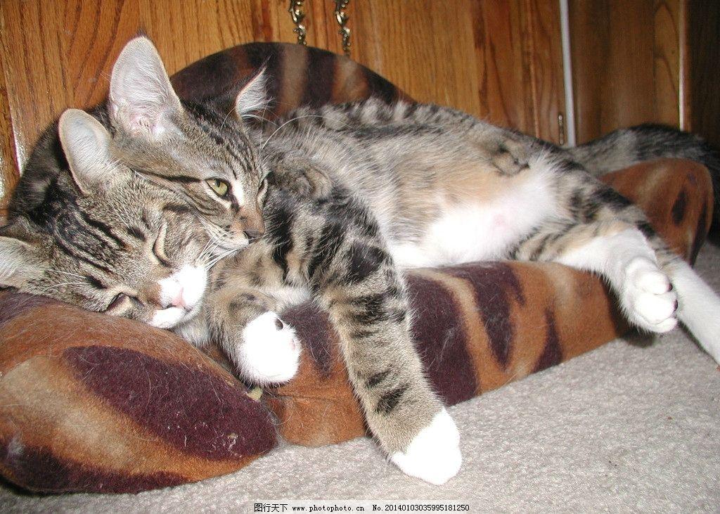 睡觉的猫 猫 猫咪 家禽 宠物 可爱猫咪 宠物猫 家禽家畜 生物世界