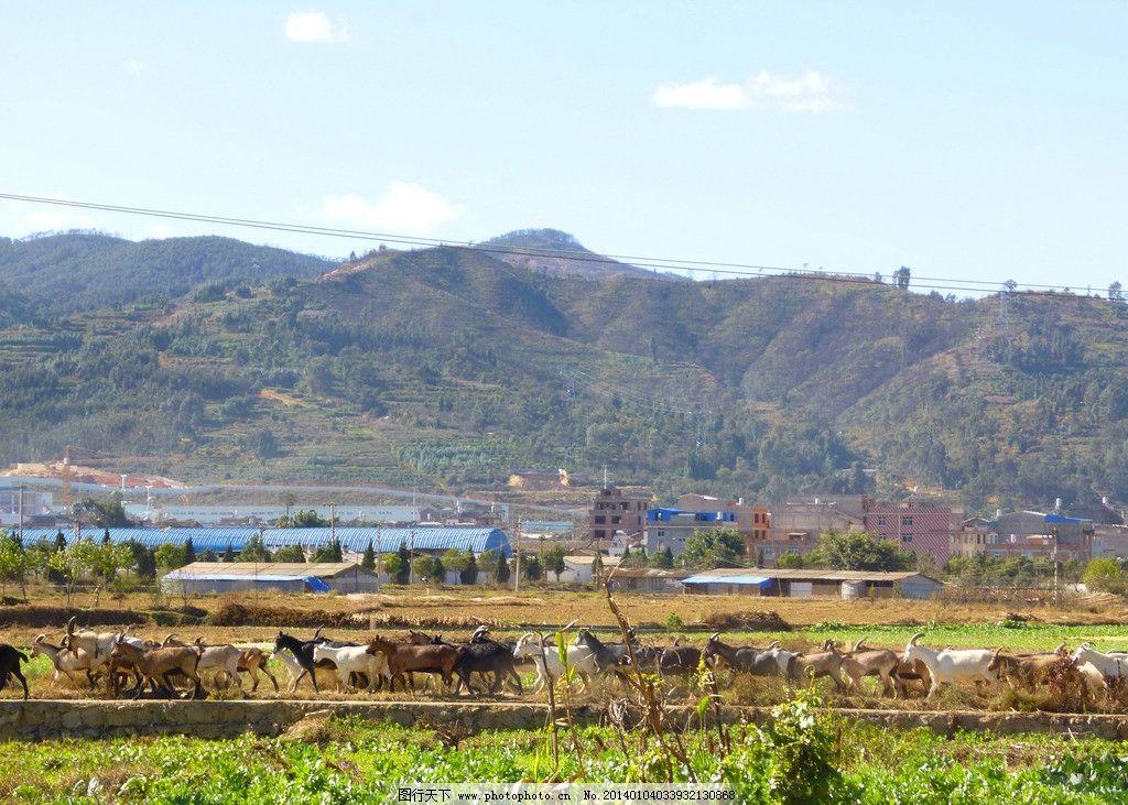农村风景 山脉 羊 村子 田路 田野 景物 国内旅游 旅游摄影