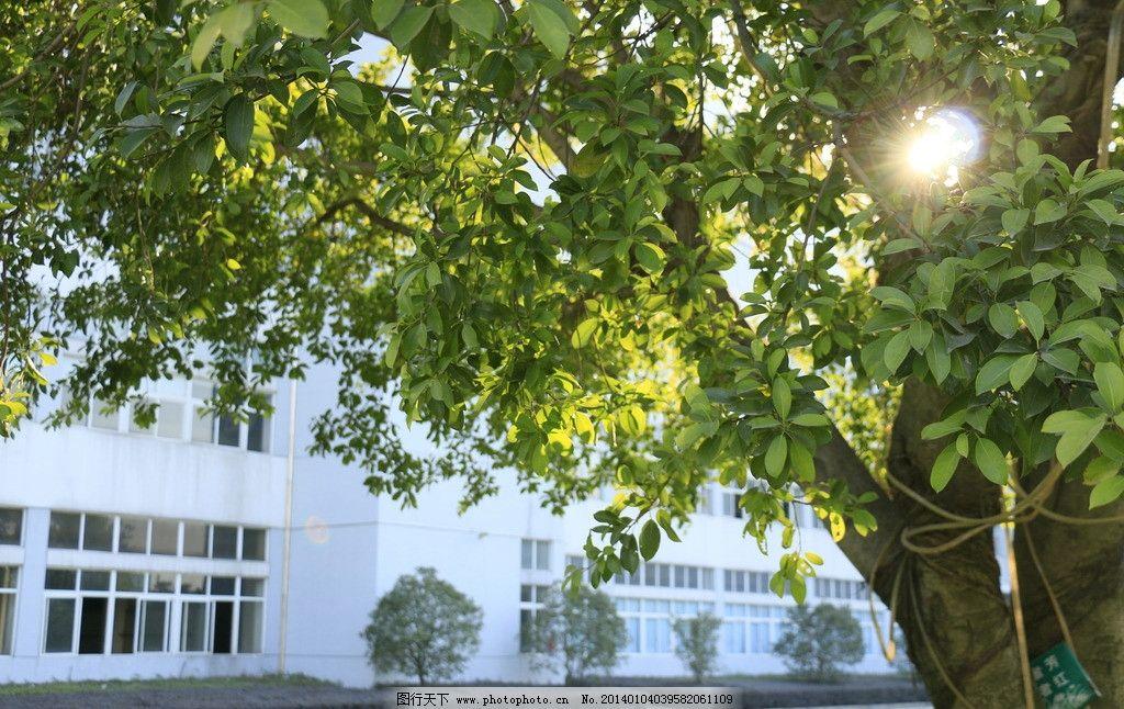 大树 阳光 树叶 公园 绿叶 树阴 园林建筑 建筑园林 摄影 72dpi jpg