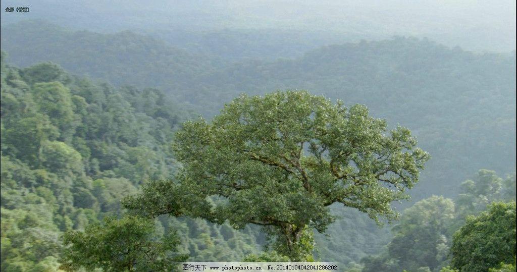 旋转的大树 森林 原始森林 树 大树 剪辑 视频 动物 植物 实拍视频 源