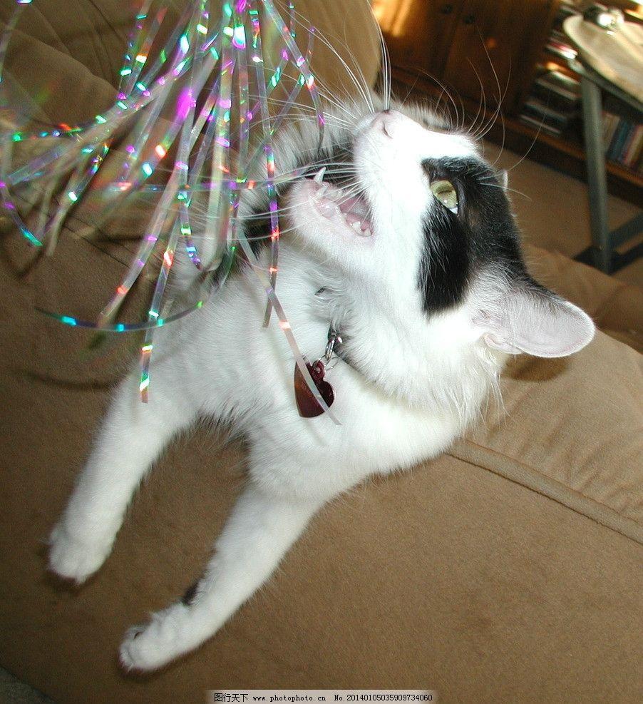 家猫组图 猫 猫咪 家禽 宠物 可爱猫咪 宠物猫 家禽家畜 生物世界