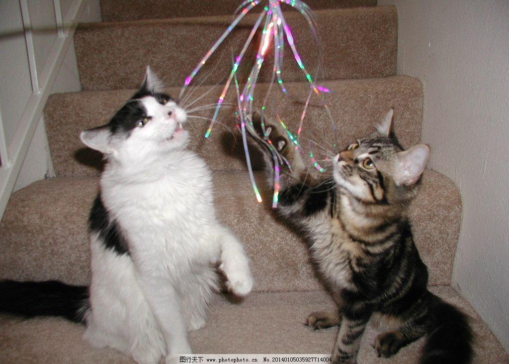 家猫组图 猫咪 家禽 宠物 可爱猫咪 宠物猫 摄影