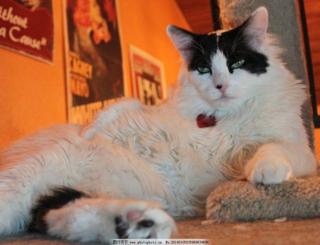 壁纸 动物 猫 猫咪 小猫 桌面 1024_785