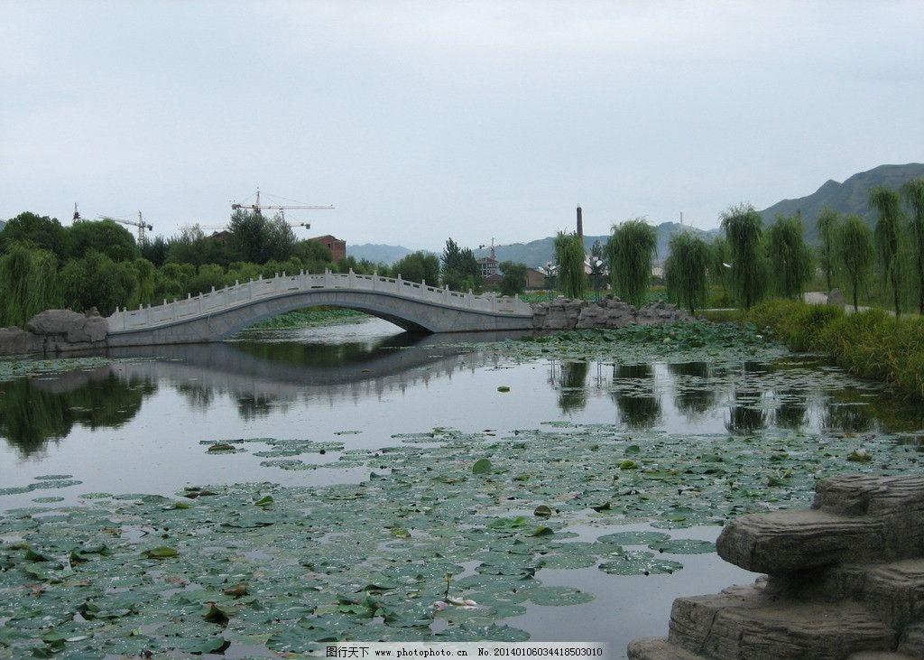 荷花池 旅游 拱桥 荷花