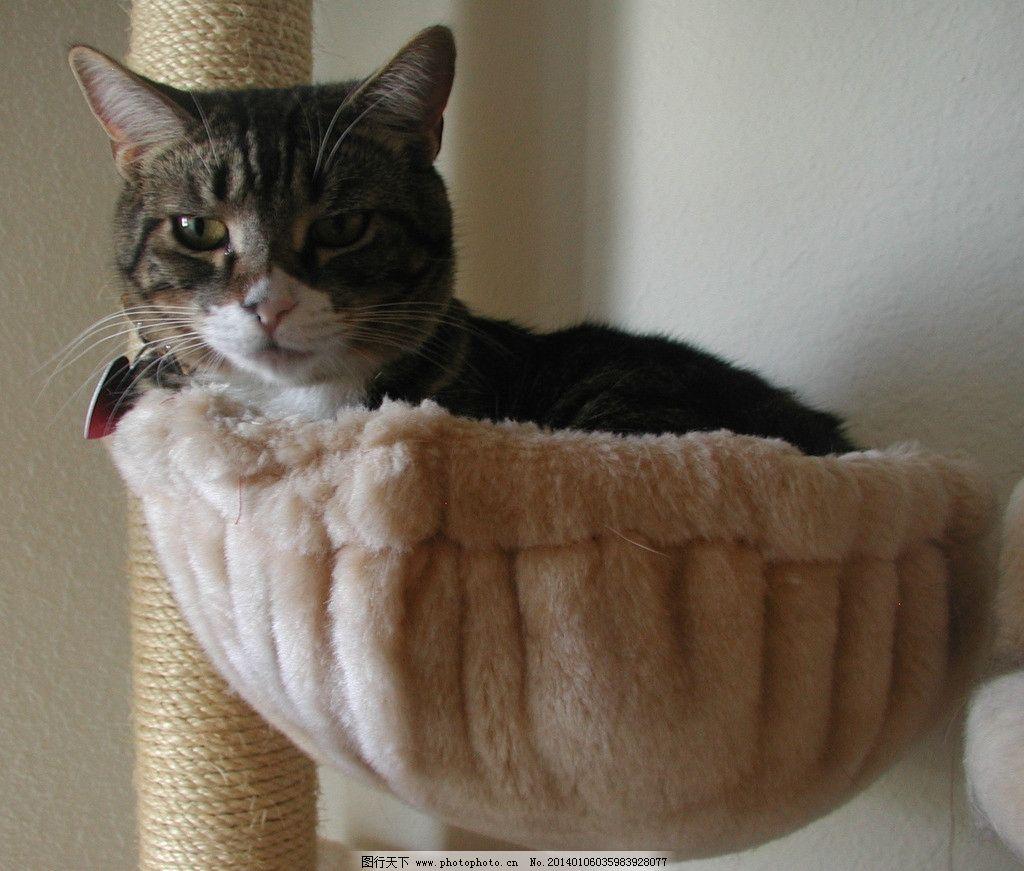 壁纸 动物 狗 狗狗 猫 猫咪 小猫 桌面 1024_871