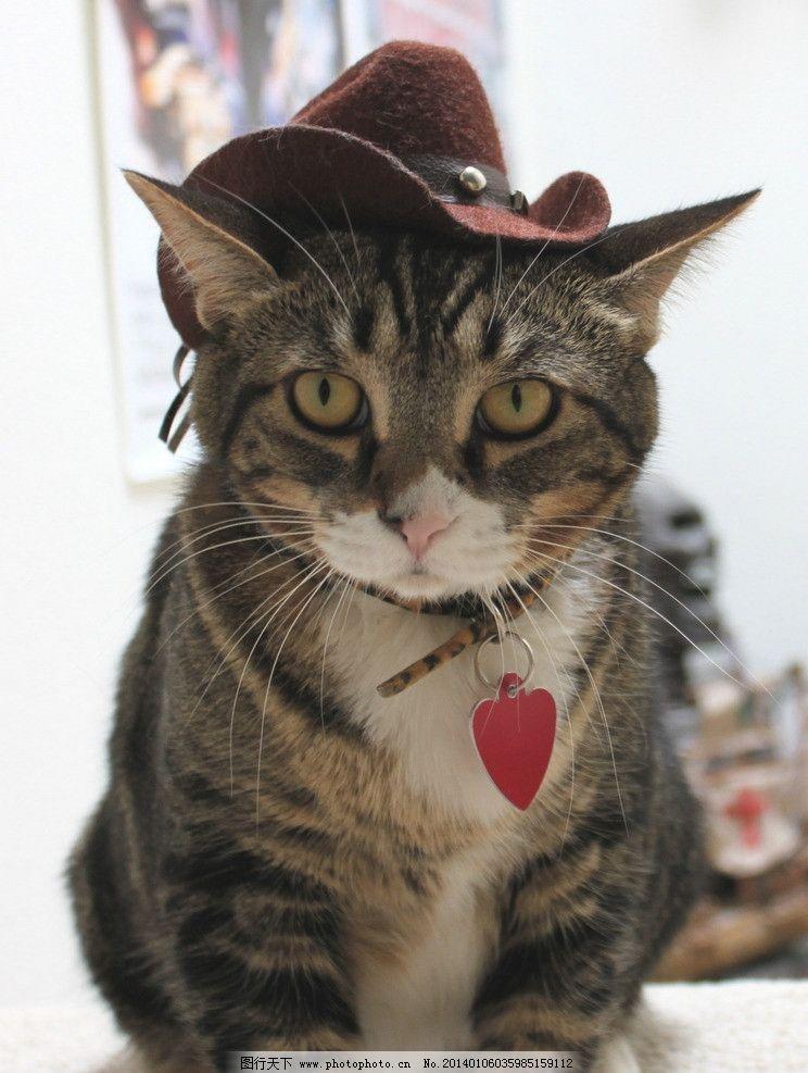 宠物猫 猫 猫咪 宠物 家禽 cat 可爱猫咪 家禽家畜 生物世界 摄影 72