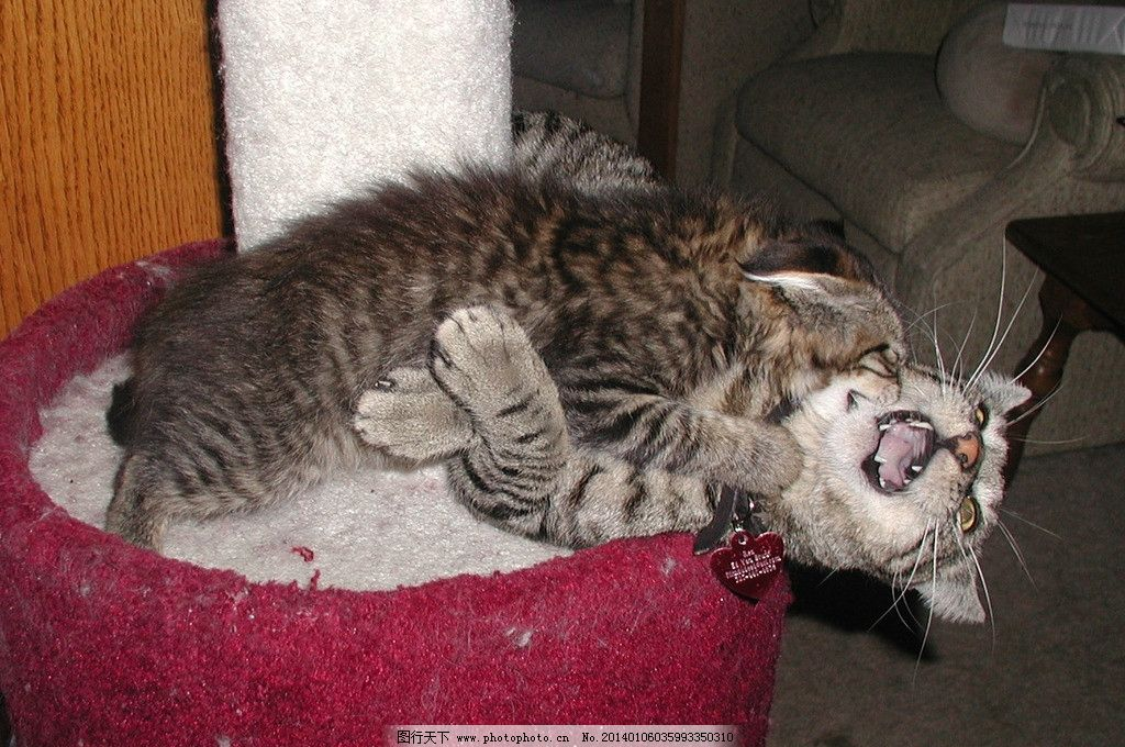壁纸 动物 猫 猫咪 小猫 桌面 1024_680