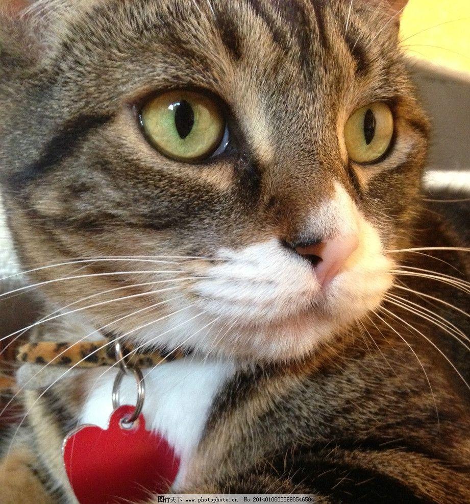 宠物猫 猫咪 家禽 可爱猫咪 摄影