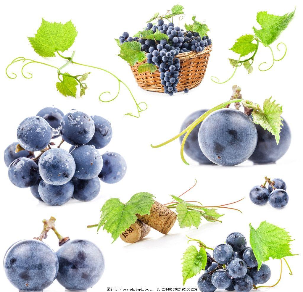 葡萄 紫葡萄 葡萄藤 绿叶 水果 植物园 叶子 果实 树叶 生物世界 摄影