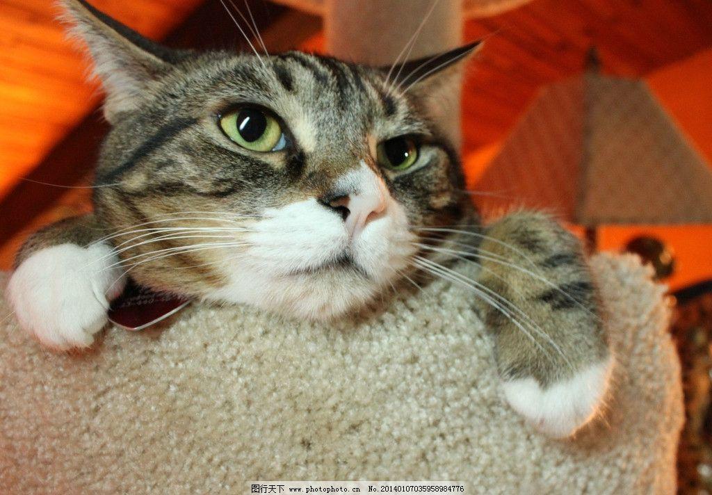 壁纸 动物 猫 猫咪 小猫 桌面 1024_712