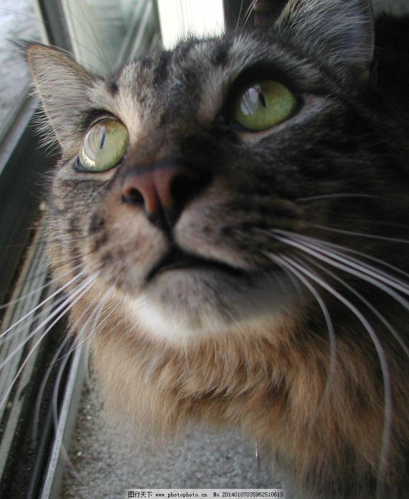 可爱猫头像3