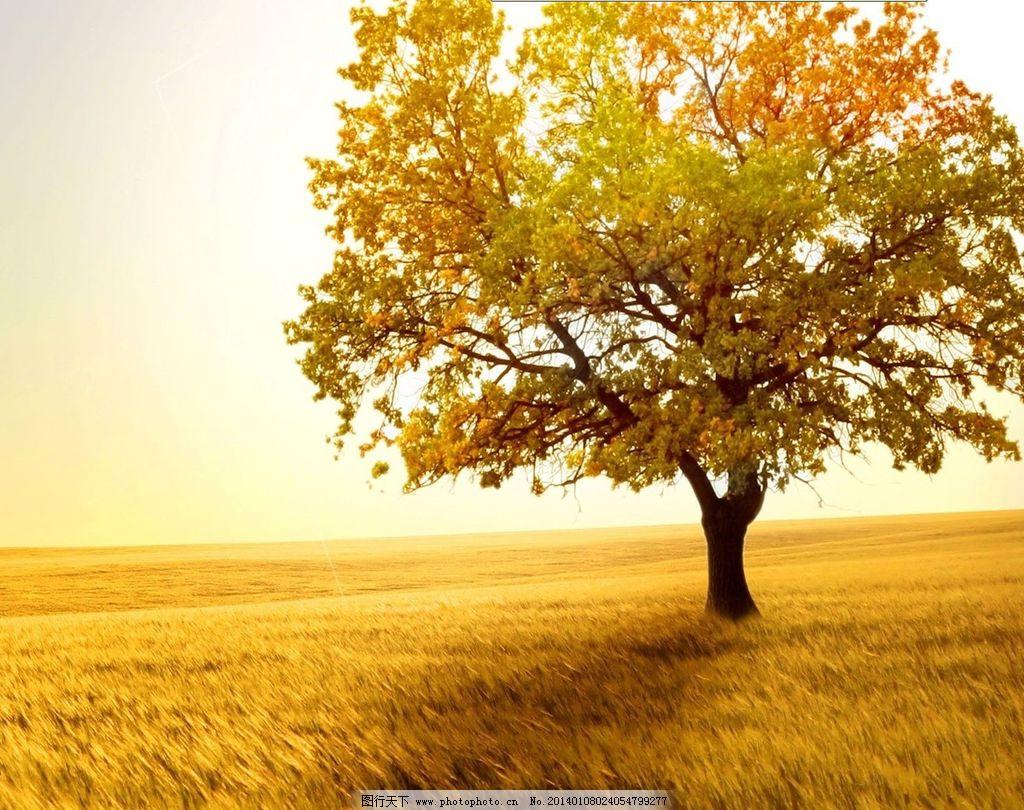 大树的高清桌面图
