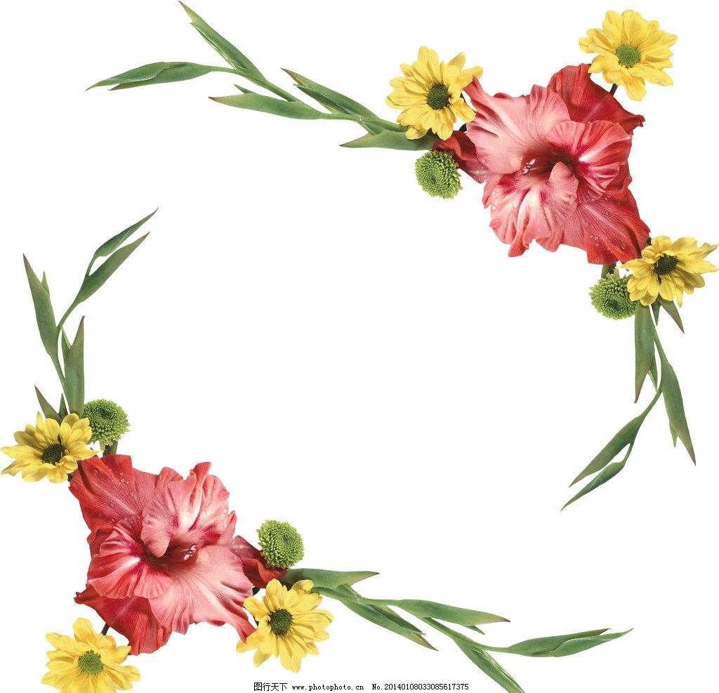 菊花边框图片