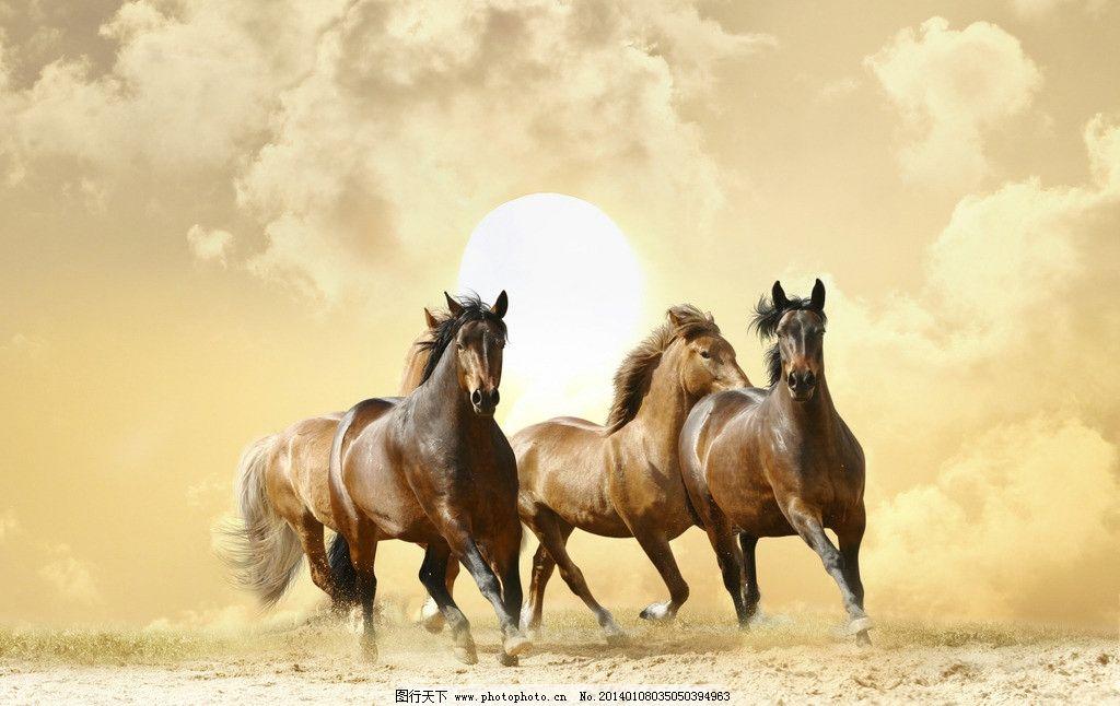 骏马 马年素材 动物 奔跑 生物 生物世界 家畜家禽 家禽家畜