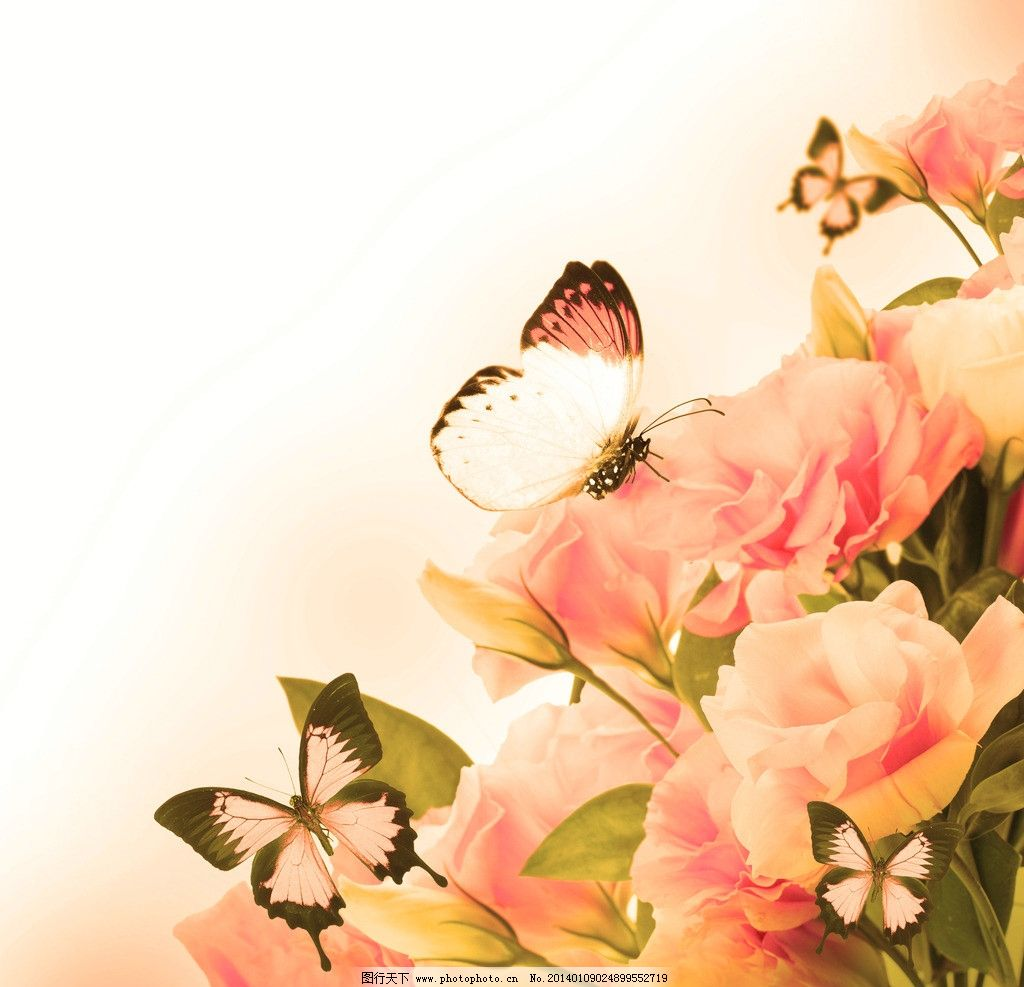 蝴蝶玫瑰花图片