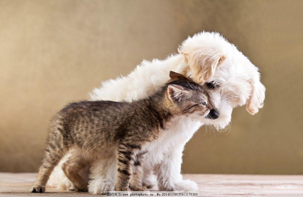 宠物狗 宠物猫 萌狗狗 狗仔 喵星人 猫咪 动物 家禽家畜 生物世界