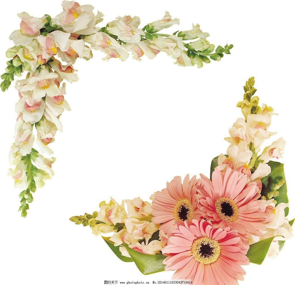 菊花边框 花卉边框 粉色菊花 边角框 鲜花 装饰花卉 花朵组合