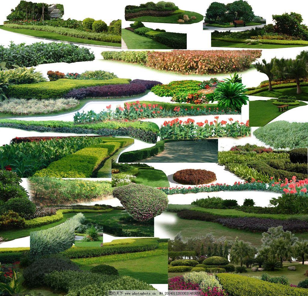 灌木组合 园林植物 景观植物 前景植物 地被植物 低矮灌木 psd分层