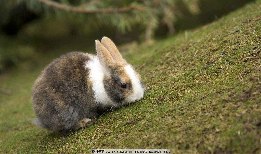 兔子 家兔 野兔 灰兔 小白兔 大白兔 白兔 兔仔 仔兔 兔 玉兔 雪兔 灰