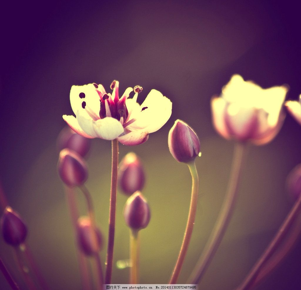 唯美小花朵图片