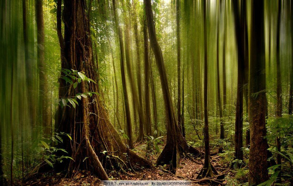 树林 大树 森林图片