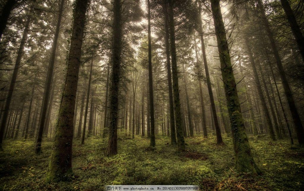 森林 茂盛树林 茂盛森林