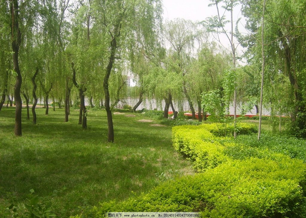 小树林 淄川 留仙湖 夏天 风景 小路 旅游 其他 旅游摄影 摄影 96dpi图片