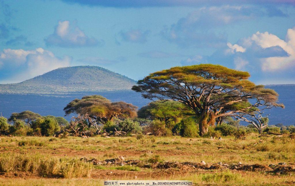 自然风景  蓝天白云草原 大树 树木 草地 草丛 草原 生物 动物 植物