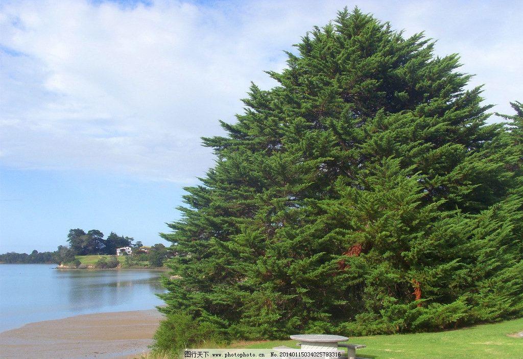 新西兰海滨风景 蓝天 白云 海湾 海水 绿草地 绿树 大松树 石桌