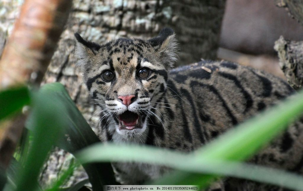 豹子 保护动物 濒危野生动物 猫科动物 花豹 野生动物 生物世界 摄影