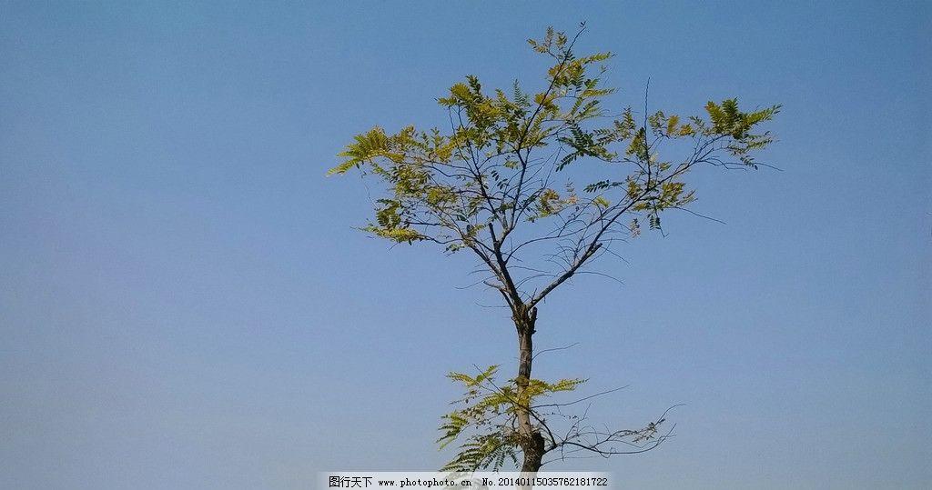 小树 蓝天 绿叶 树干 树叉 花草 生物世界 摄影 100dpi jpg