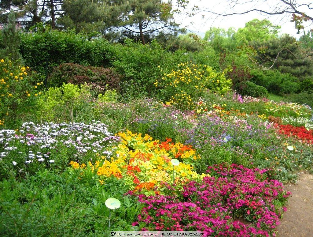 北京植物园花镜图片