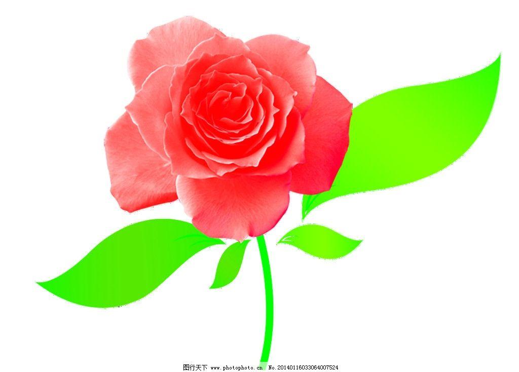花 花朵 玫瑰图片