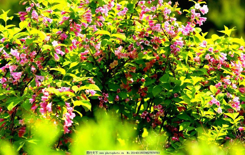 红花绿叶风景美女图片