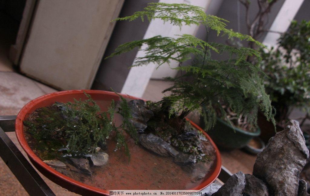 九里香树木盘景