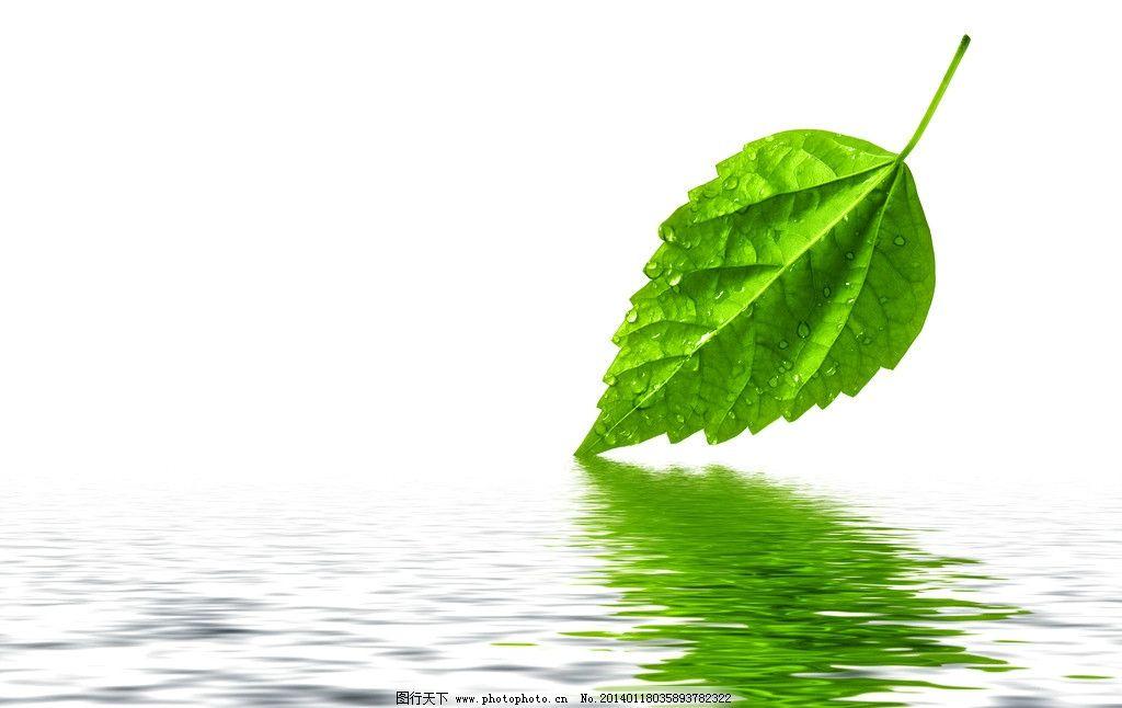 绿叶 树叶 叶子 绿色 水珠 水面 清新 倒影 新鲜 树枝树木树叶绿树图片