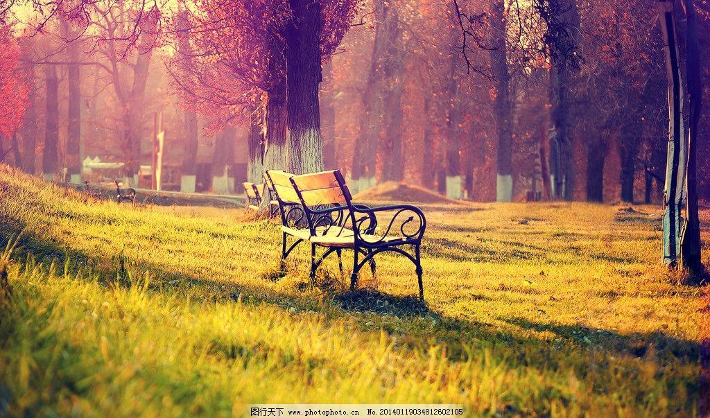 秋天风景 秋景 唯美 树林 椅子 草地 摄影