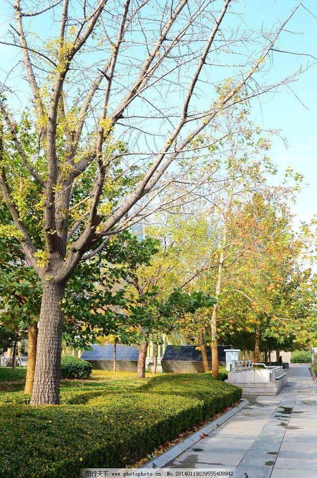 深秋街道 风景 风光 摄影 园林 景观 乔木 灌木 花坛 色带图片