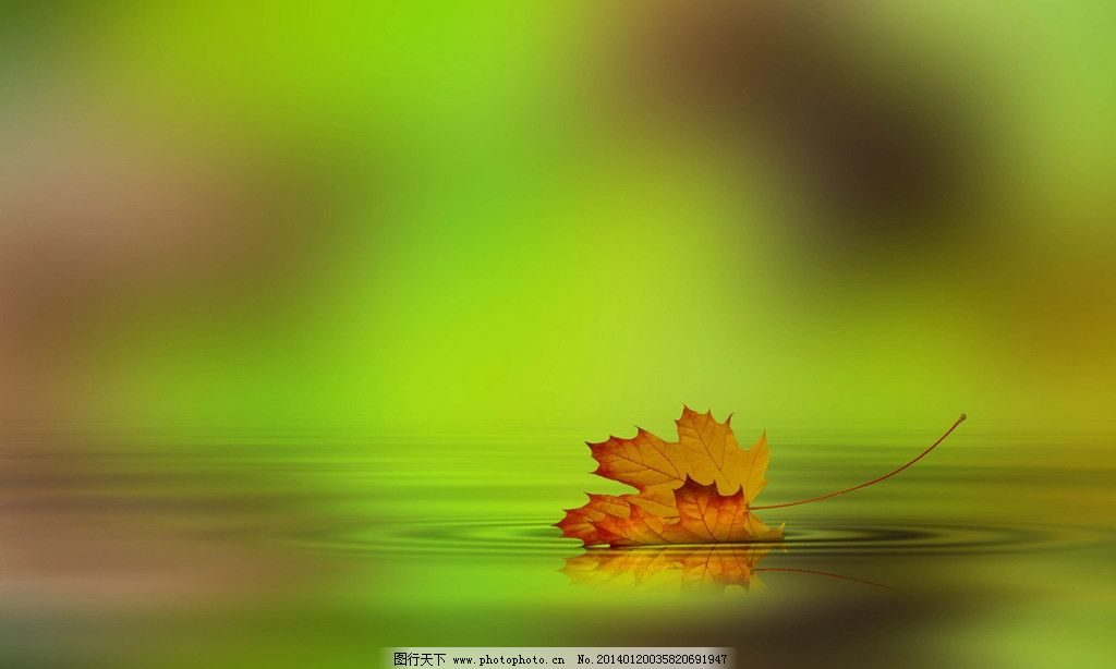 落叶 落叶图片素材下载 秋景 枫叶 秋天落叶 秋天景色 摄影图片