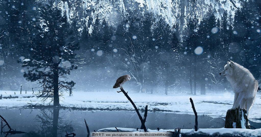 冬季深林图片_野生动物