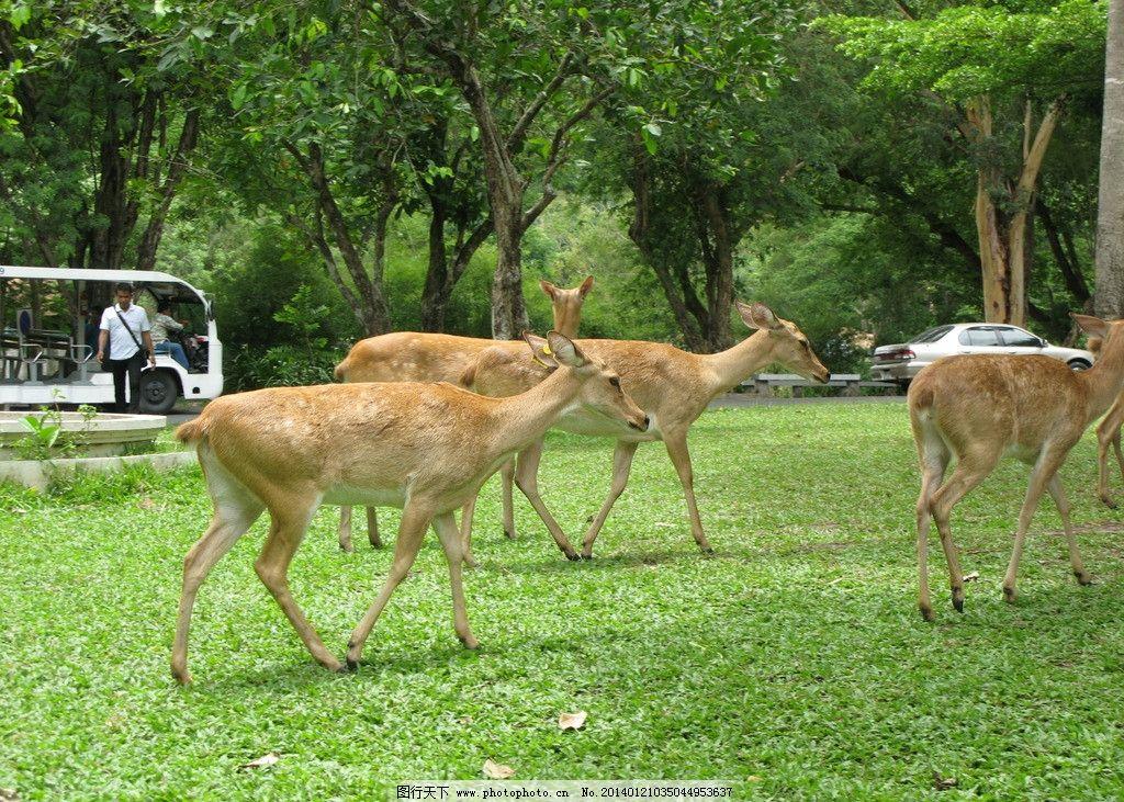 动物 风景 鹿图片
