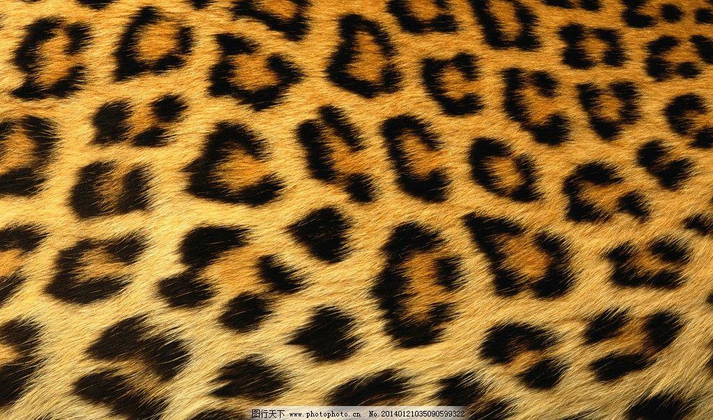 高清纹理图图片,动物 图案 画布 豹纹 花纹 野生动物-图行天下图库