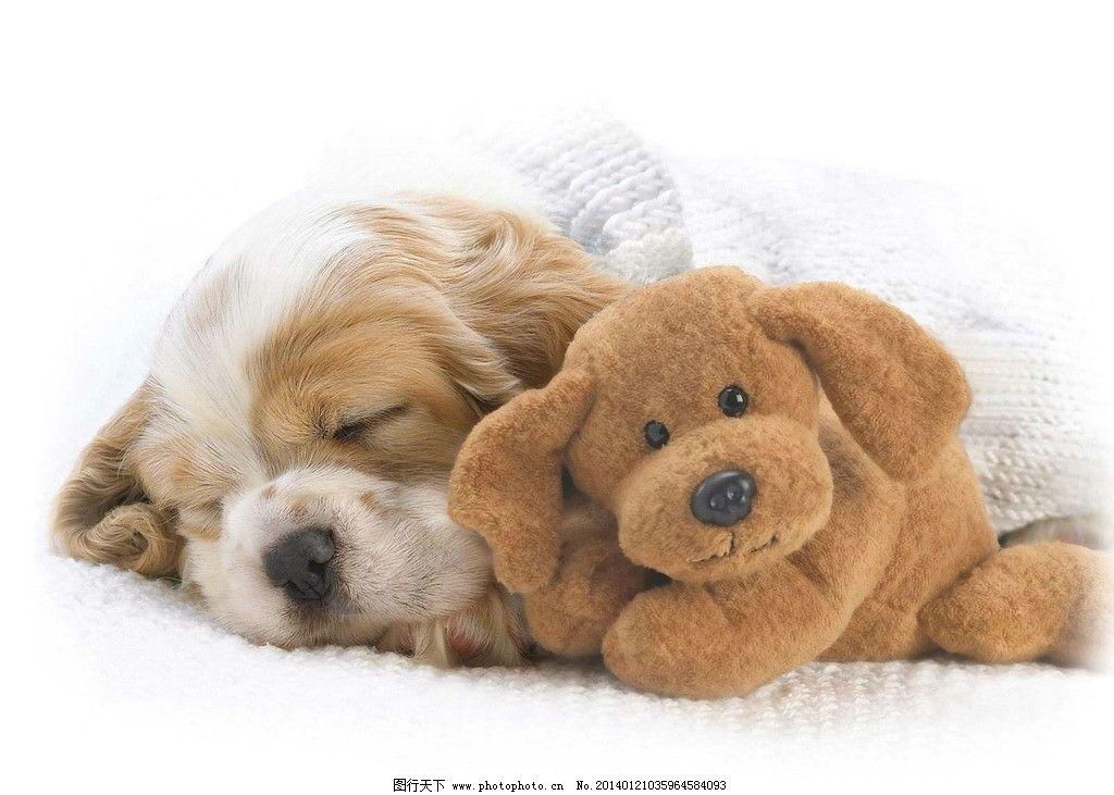 狗 狗狗 狗宝宝 可爱 小动物 家畜 宠物狗 家禽家畜 生物世界 摄影 7