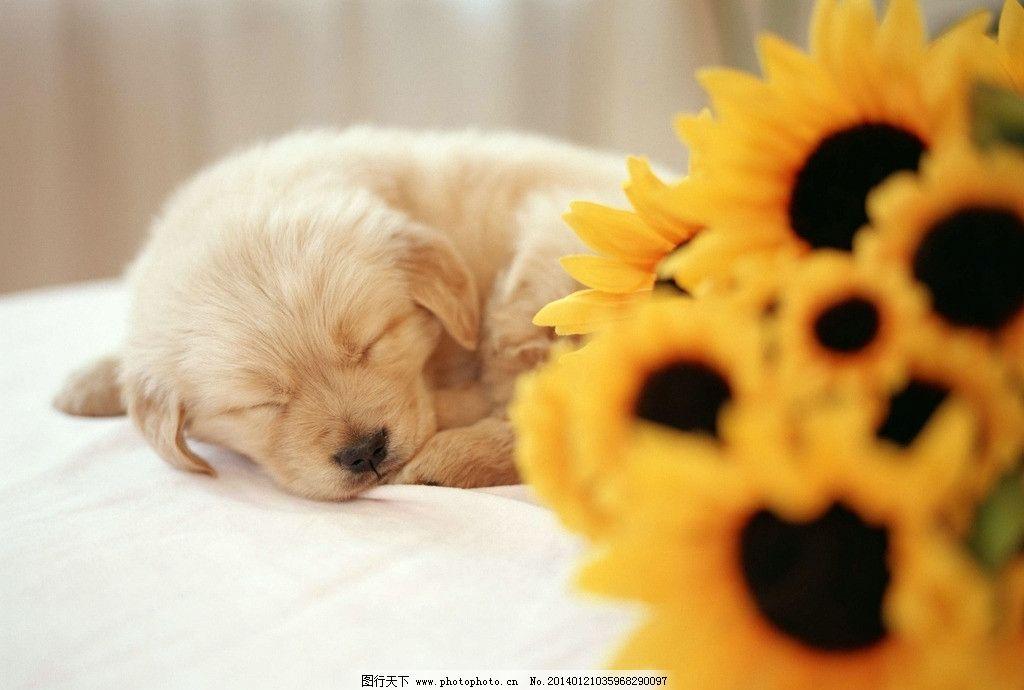 狗 狗狗 小狗狗 可爱 宠物狗 家畜 狗宝宝 小狗 家禽家畜 生物世界